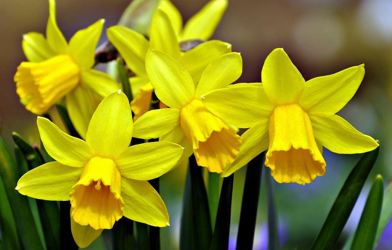 Привітання зі святом 8 березня